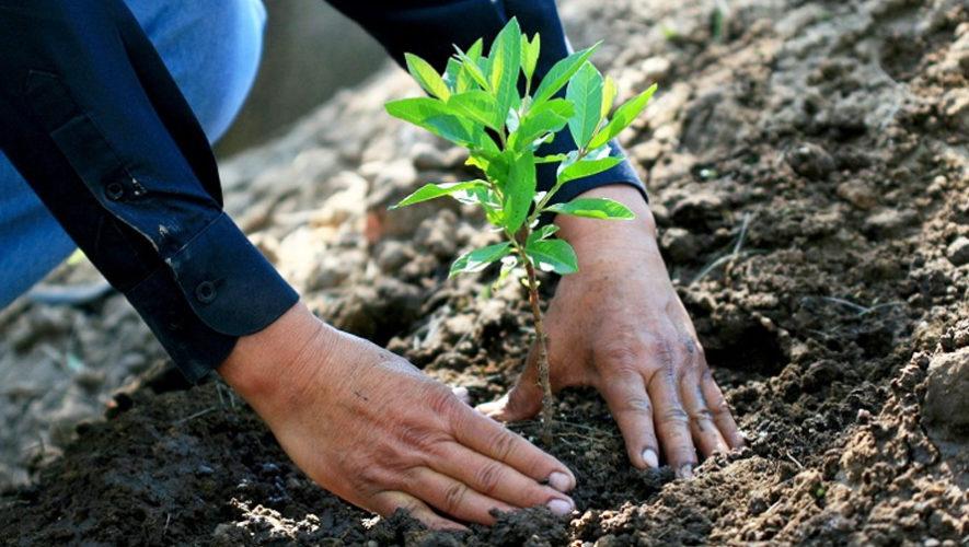 reforestacion_metroproyectos